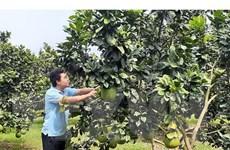 Trà Vinh: Nhộn nhịp thị trường trái cây phục vụ Tết Nguyên đán