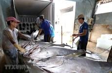 Khắc phục thẻ vàng IUU: Quyết tâm chống khai thác hải sản bất hợp pháp