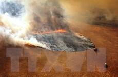 Các nhà khoa học cảnh báo nguy cơ xảy ra cháy rừng thường xuyên