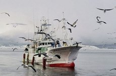Nga trả tự do cho tàu cá Nhật Bản bị bắt tại vùng biến tranh chấp