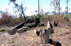 """Lâm Đồng: """"Nóng"""" tình trạng phá và rao bán đất rừng ở Phi Liêng"""