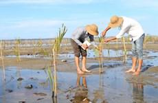 Giải pháp phục hồi và phát triển rừng ngập mặn Nam Trung Bộ