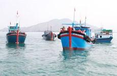 Ninh Thuận định hướng xây dựng nghề cá phát triển bền vững
