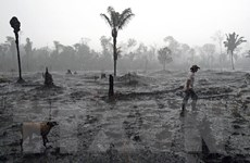 """""""Lá phổi xanh"""" Amazon có thể trở nên khô cằn trong vòng 50 năm tới"""