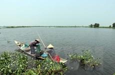Thừa Thiên-Huế nỗ lực khôi phục khu tràm chim ở cửa sông Ô Lâu