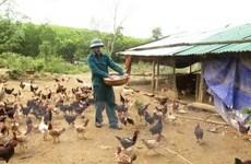 Tỉnh Thanh Hóa công bố hết dịch cúm gia cầm A/H5N6