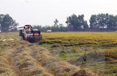 Nông dân tự giác phòng dịch bệnh khi ra đồng thu hoạch nông sản