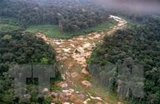 Lợi dụng dịch COVID-19, rừng Amazon tiếp tục bị tàn phá nghiêm trọng