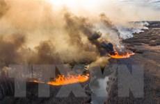 Ukraine đã dập tắt đám cháy rừng gần nhà máy điện hạt nhân Chernobyl
