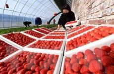 Trung Quốc và một số nước thảo luận về đảm bảo chuỗi cung ứng toàn cầu
