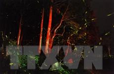 [Photo] Vẻ đẹp lung linh huyền ảo trong mùa đom đóm ở rừng Cúc Phương