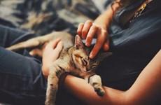 Cảnh báo nguy cơ lây nhiễm virus SARS-CoV-2 giữa mèo với mèo