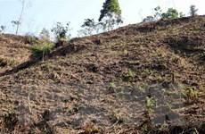 Tuyên Quang: Hàng nghìn mét vuông rừng phòng hộ Lăng Chua bị phá trắng