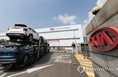 Kia Motors lại có kế hoạch ngừng hoạt động chế tạo xe tại Hàn Quốc