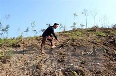 Xác minh, làm rõ trách nhiệm trong vụ phá rừng phòng hộ Lăng Chua