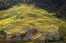 Vẻ đẹp cánh đồng ruộng bậc thang trải dài xã vùng cao ở Hòa Bình