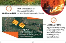 [Infographics] Đám cháy rừng ở Nghệ An đã được kiểm soát