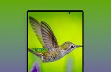 Samsung sẽ ra mắt 2 mẫu điện thoại gập mới trong nửa cuối năm