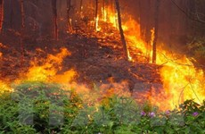 Nghệ An: Cháy rừng thiêu rụi 40ha thông và keo, không lan đến nhà dân