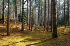 Khai thác gỗ ở châu Âu đe dọa mục tiêu chống biến đổi khí hậu