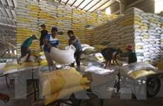 Mưa dai dẳng cản trở vụ thu hoạch, giá gạo của Việt Nam tăng
