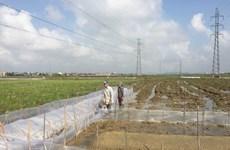 Hà Nội giải quyết vướng mắc về quyền sử dụng đất sau dồn điền đổi thửa