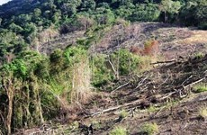 Thanh tra Gia Lai kiến nghị xử lý trách nhiệm quản lý rừng Chư A Thai