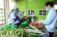 Giá các loại rau tại Đà Lạt tăng cao do nguồn cung khan hiếm