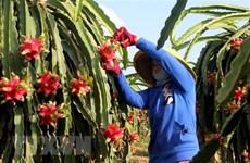 Long An ứng dụng công nghệ cao tạo bước đột phá cho nông nghiệp