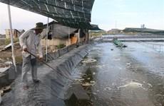 Không để phát triển tràn lan diện tích nuôi tôm sú vùng Đồng Tháp Mười