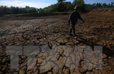 [Photo] Hà Tĩnh quay quắt trong nắng hạn, thiếu nước sử dụng