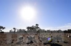 Nhiệt độ trung bình toàn cầu có thể tăng cao hơn mức dự báo