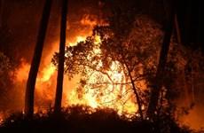 Pháp: Cháy rừng thiêu rụi 40ha thông, buộc nhiều người phải sơ tán