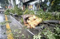 Cơn bão Bavi gây nhiều thiệt hại cho Hàn Quốc và Triều Tiên