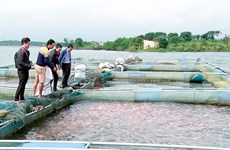 Cần Thơ thả 30.000 cá giống tái tạo nguồn lợi thủy sản