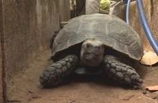 Đắk Lắk khởi tố đối tượng nuôi nhốt trên 100 cá thể rùa quý hiếm