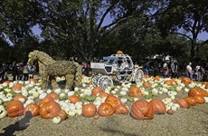 [Photo] Mỹ: Độc đáo ngôi làng bí ngô cổ tích vào mùa Lễ hội Halloween