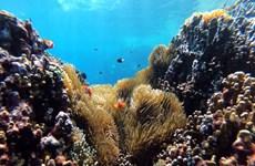 Indonesia xây công viên san hô khổng lồ tại Bali để hút khách du lịch