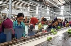 Dự án nông nghiệp tại Campuchia hỗ trợ chuyển nghề cho người gốc Việt