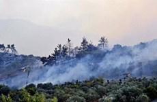 Cháy rừng nghiêm trọng tại Syria và Liban gây thương vong