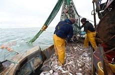 Brexit: Anh thể hiện thiện chí đàm phán về quy định đánh bắt cá