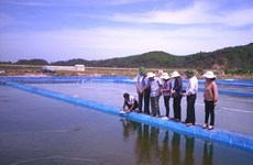 Ngao Nam Định đạt chứng nhận ASC đầu tiên trên thế giới
