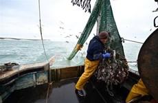 WTO không đạt thỏa thuận cắt giảm trợ cấp đánh bắt cá trước hạn chót