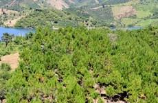 Phát hiện phiến đá hơn 300 năm tuổi khắc quy định bảo vệ môi trường