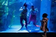 Ấn tượng những bộ Hanbok trong lòng thủy cung ở Hàn Quốc
