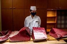 Giá cá ngừ giảm mạnh trong phiên đấu giá đầu năm tại Nhật Bản