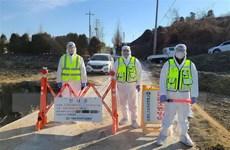 Hàn Quốc phát hiện thêm ba ca mắc cúm gia cầm độc lực cao