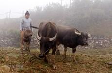 Rét đậm ảnh hưởng đến cuộc sống của người dân tại Cao Bằng