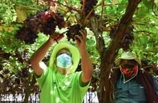 Nam Phi hướng đến thị trường châu Á nhằm phục hồi kinh tế hậu COVID-19