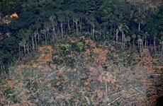 Sinh kế của con người gắn bó với hệ sinh thái rừng